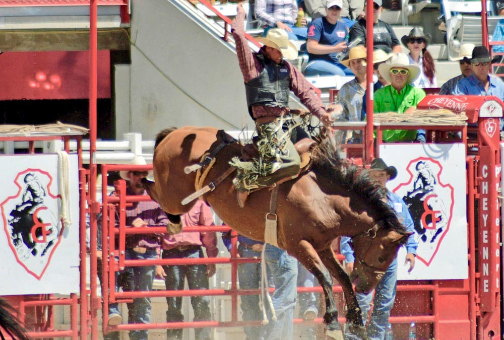 Bronc rider at Cheyenne Frontier Days rodeo