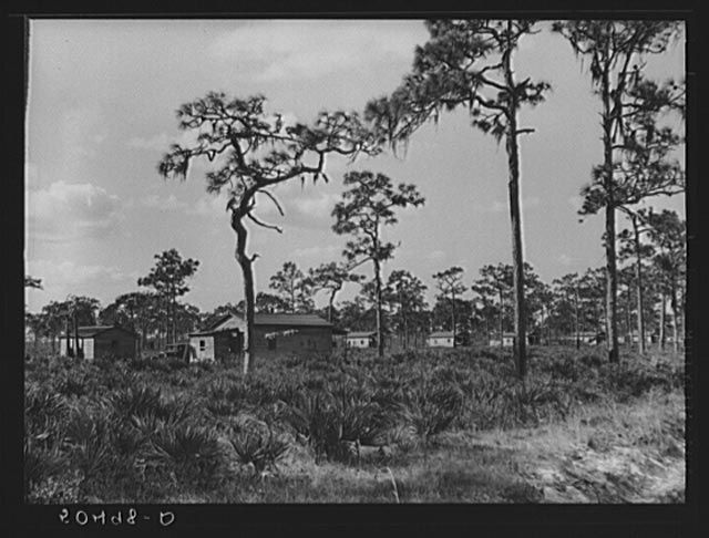 Turpentine camp. North Florida 1939