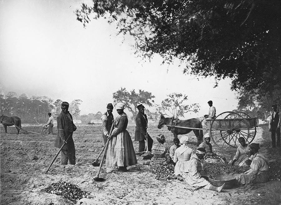 Planting sweet potatoes. ca. 1862/63