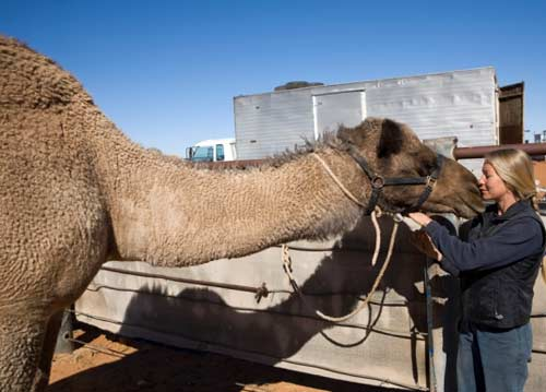 Glenda kissing camel