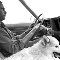 Larry driving with his dog Bo