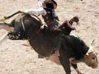 Bull rider at Cheyenne Frontier Days rodeo