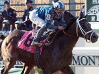 Jazil, the 2006 Belmont Stakes winner